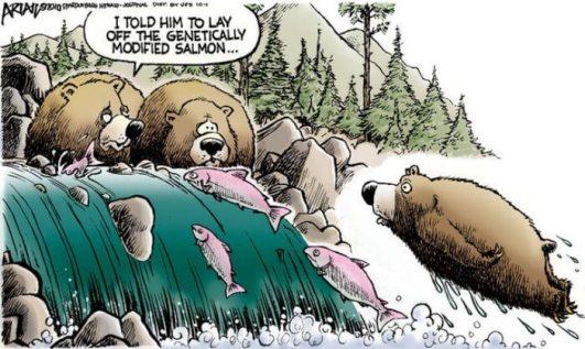 GMO bear
