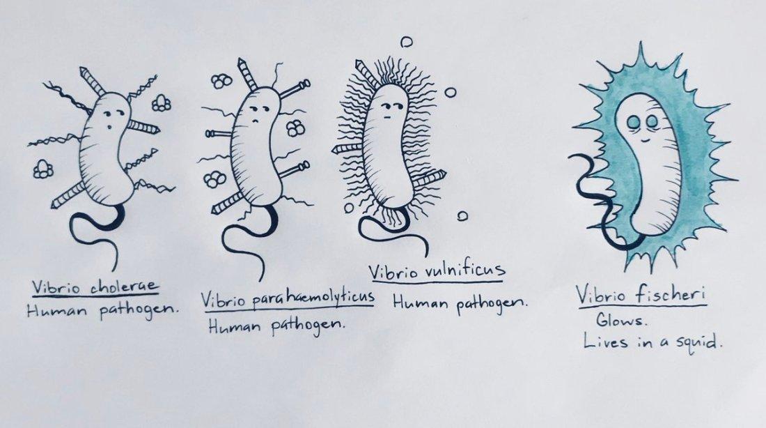 Sci-Art_Santoreiello-vibrio